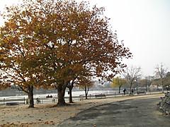 Pc060855